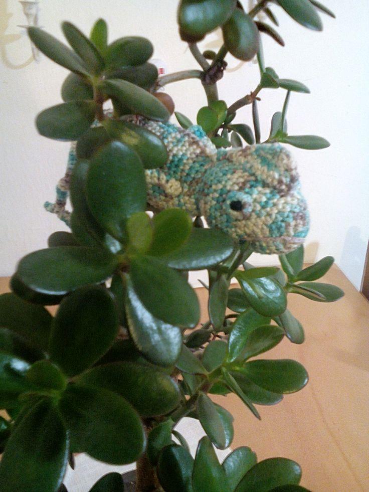 Háčkovaný chameleon :-)