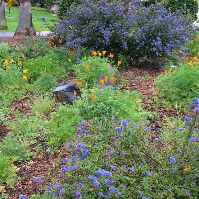 140 Best Images About California Native Gardens And Plants