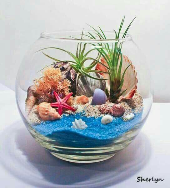 Another cool idea for sand, shells and air plants.