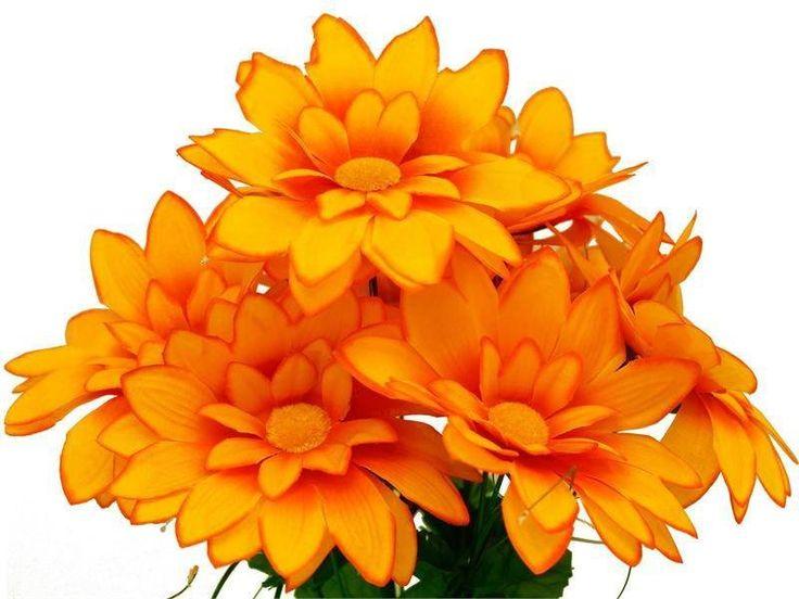 Looking For Alaska Flower: Best 20+ Orange Flower Names Ideas On Pinterest