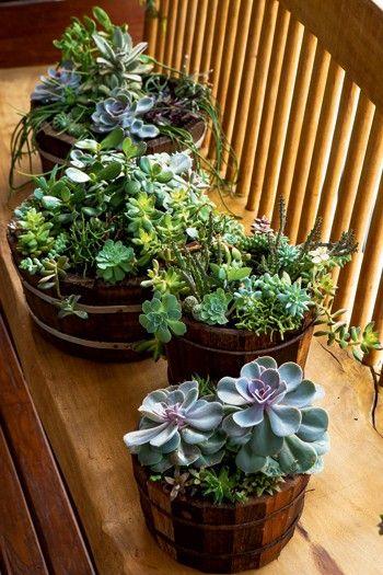 6 dicas para incrementar seu jardim | 4. Rejeição zero