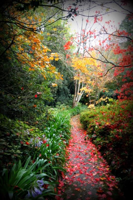 2014 Youth Photography Competition: Finalists, Ages 12-14. 'Up the garden path', by Rory.