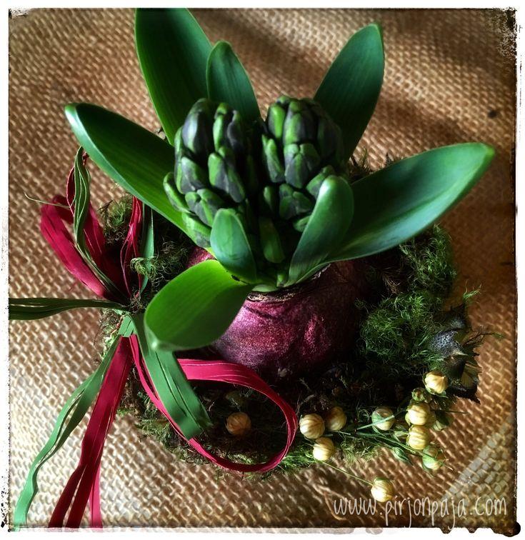 joulu, joulukukka, jouluasetelma , Xmas flower