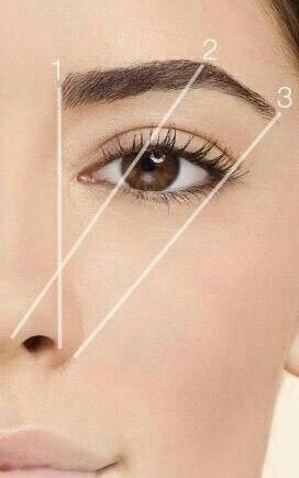 The golden ratio for perfect brows