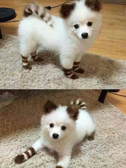 -repinned- Adorable creative dog grooming,