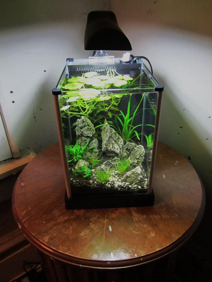 Andrew 39 s 2nd tank planted spec 2 tank boraras for What type of water do betta fish need