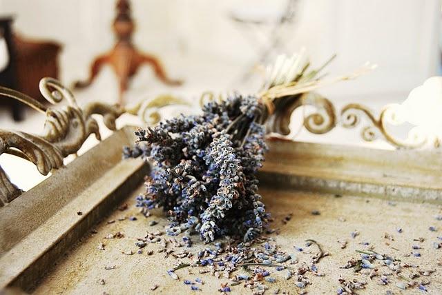 lavender tray: Lavender Nests, Little Lavender, Things Lavender, Lavender Trays, Lavender Mi Lavender