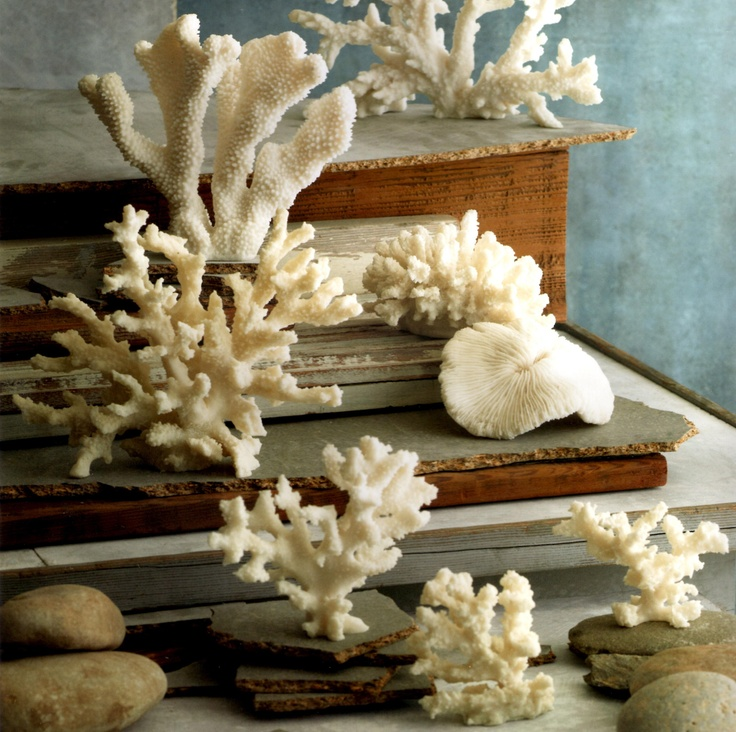 As seen in Coastal Living Magazine. Cast resin impressions of real coral forms, create a non-endangered seaside element. Realistic ridges and texture emulate natural coral. From the coral collection at SeasideInspired.com