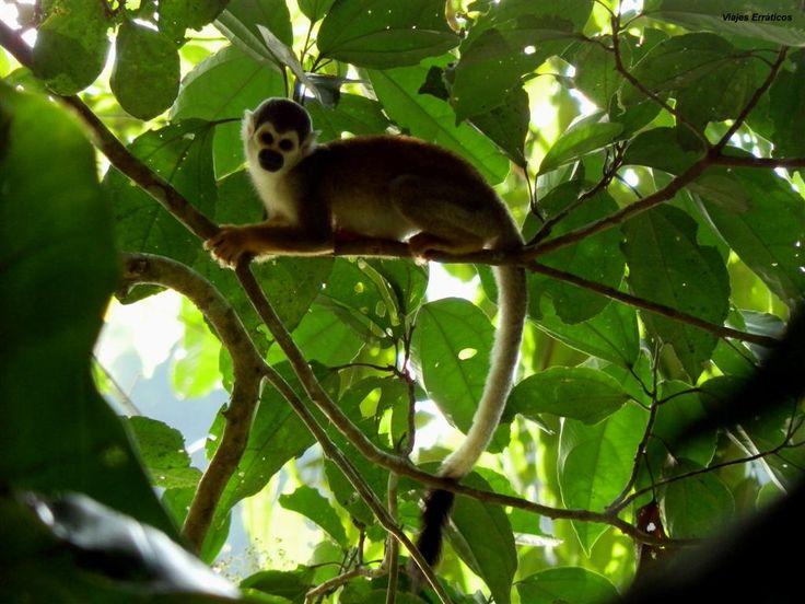 #ParqueNatural #EcuadorEsNatura PERLA, Parque Ecológico Recreacional Lago Agrio, Sucumbíos, Ecuador.