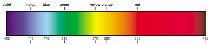 A typical human eye sees wavelengths from about 380 to 750nm. The visible spectrum starts with violet at 350nm, then indigo, blue, green, yellow, orange, & finally red. A rainbow is a continuous spectrum of the colors of the visible spectrum.  A great way to remember what colors are in the rainbow (visible spectrum) is by making the acquaintance of Mr Roy G. Biv. A mnemonic for the sequence of colors in the visible spectrum, in rainbows, & in order from longest to shortest wavelength.