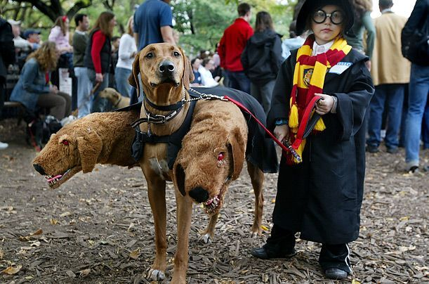 harry potter - amazingHalloweencostumes, Halloween Costumes Ideas, Harry Potter Halloween, Dogs Costumes, Harrypotter, Dog Costumes, Dogs Halloween Costumes, Future Kids, Halloween Ideas