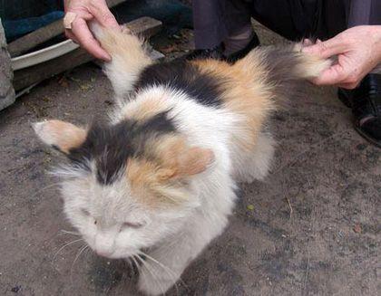 """Résultat de recherche d'images pour """"chat chinois ailé"""""""