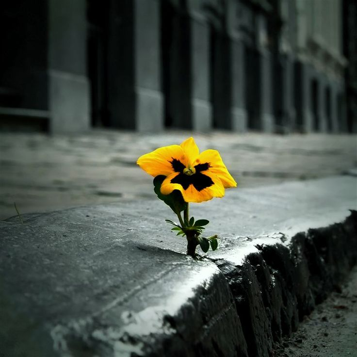 Solitude & Nature (Stomu Yamashta - Go)