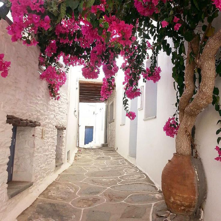 Kythnos island (Κύθνος). Colorful flowers at beautiful Cycladic alley !!