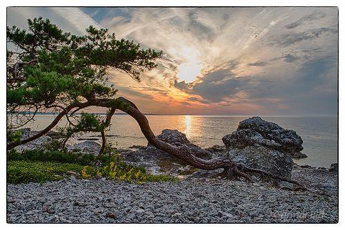 Gotland early morning