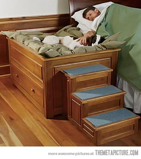 Perfect bed for your dog!  I need this!