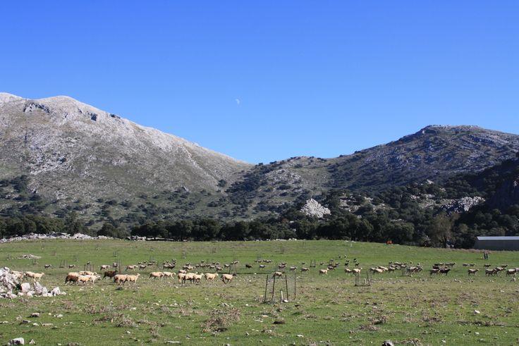 Llanos de Libar