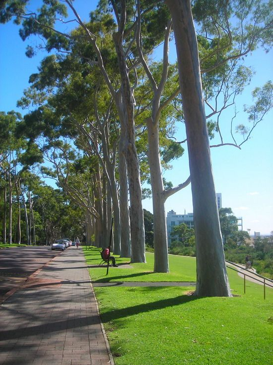 King's Park in Perth, Australia is the most immaculate and perfectly manicured park I've ever seen. Larger than Central Park in NYC. Overlooks Perth.