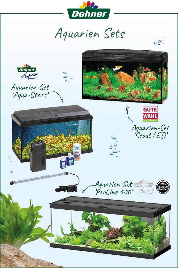 Praktische Aquarien Sets Fur Einsteiger Aquarium Fur Anfanger Aquarium Anfanger Kleines Aquarium