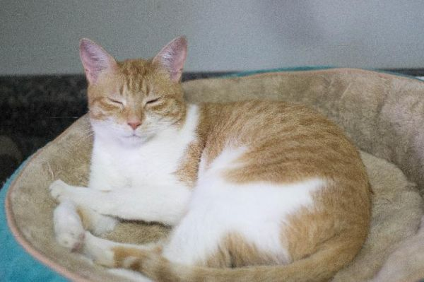 Cats For Adoption Petfinder Pet Adoption Cat Adoption Pet Care