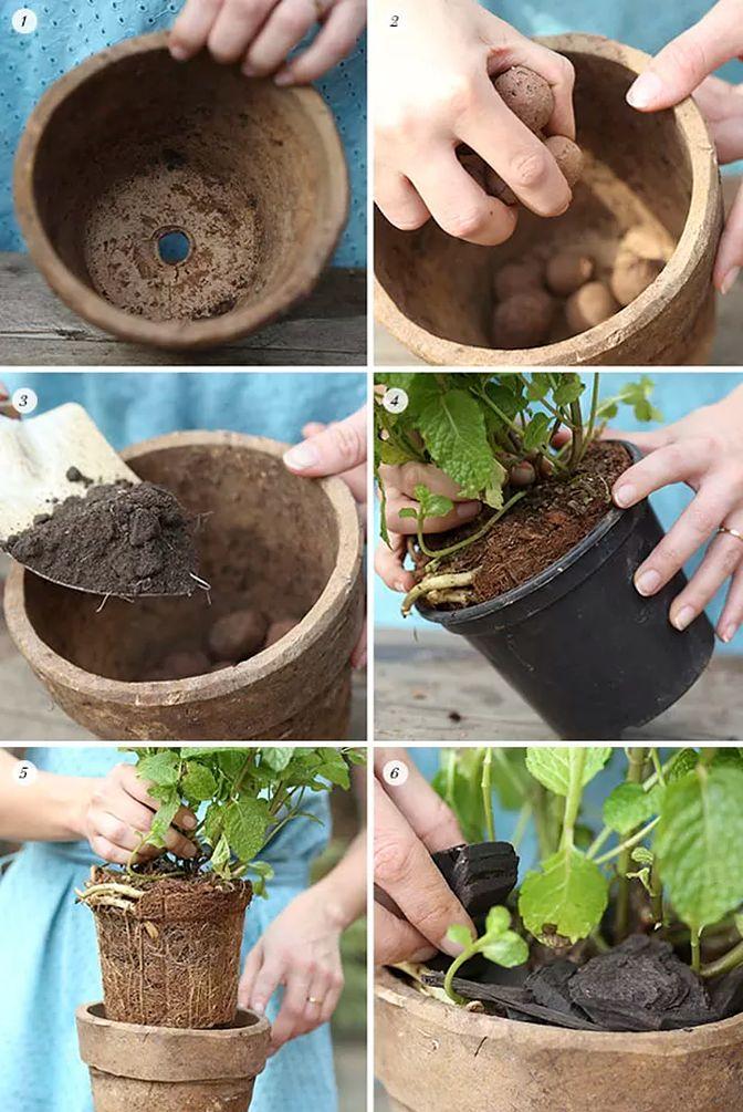 Mini Horta de Temperos hortas Pinterest Minis