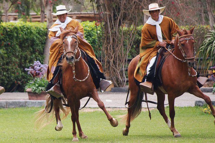 Paso Fino vs. Peruvian Paso: What's the Difference? | HORSE NATION