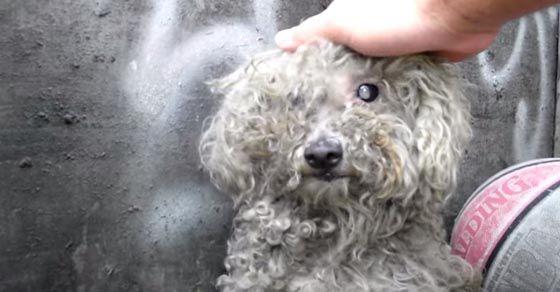 Un cane vive solo nel degrado a sud di Los Angeles dove è facile trovarla nei pressi di una zona abbandonata. Nessuno la considera finchè un giorno qualcuno decide di chiamare un'associazione che si occupa dei cani abbandonati. Questi intervengono e fanno qualcosa di grande. Scoprono che la cagnolina è cieca e molto impaurita. Decidono…