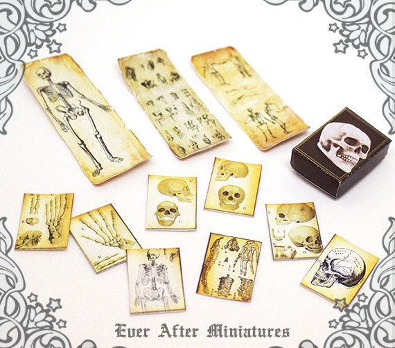 Anatomy Dollhouse Miniature Scroll & Paper Set – 12th Scale Antique Doctor Medical Poster Skeleton Miniature Scroll Paper Printable DOWNLOAD