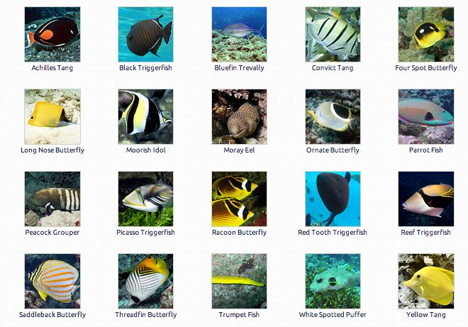 Fish identification guide for Hawaii fish guide