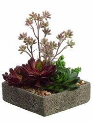 """11"""" Artificial Aeonium, Sedum, Echeveria Succulent Arrangement in Cement Pot  $59.99 (9""""square)"""
