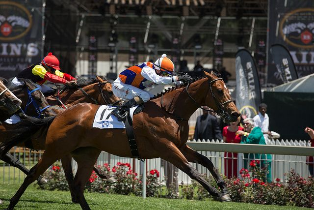 Sansui Summer Cup 2013   Flickr - Photo Sharing!