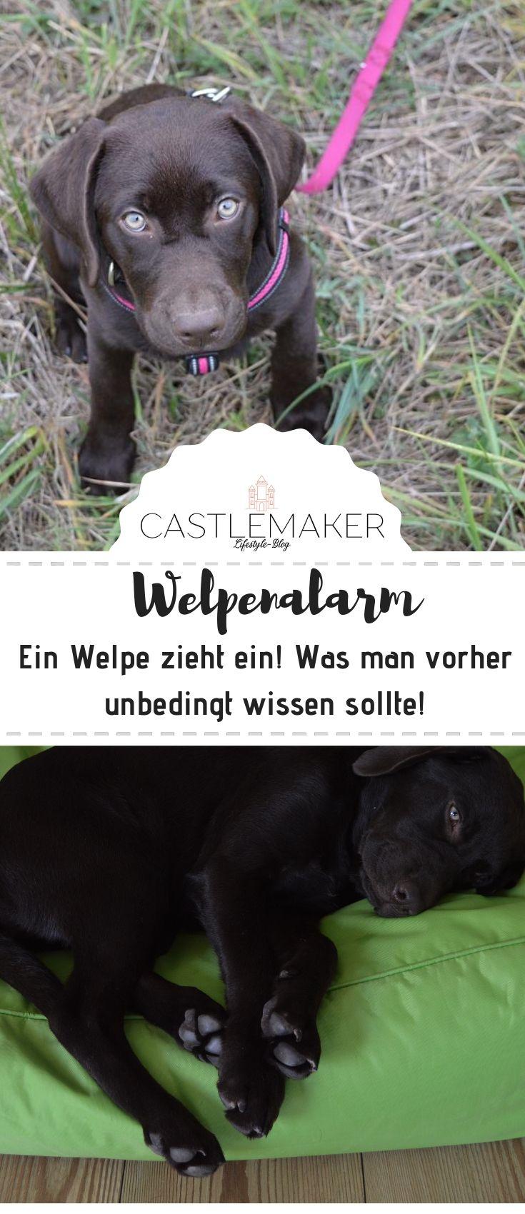 Ein Welpe Zieht Ein Die Ersten Wochen Erstausstattung Erfahrungen Mehr Castlemaker Welpen Hunde Welpen Hundewelpen