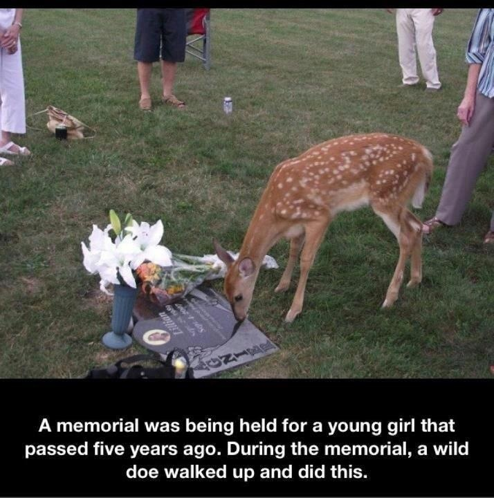 Fawn: Years Ago, Sweet Things, Doe Walks, Wild Doe, Wild Fawns, Animal Stories, Random Stuff, Beautiful Pictures, Young Girls