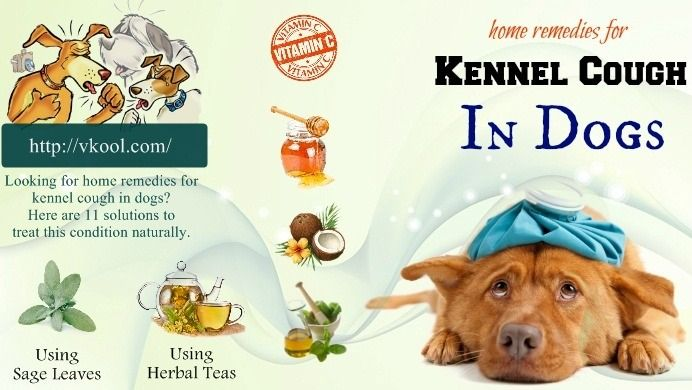 Top 11 Best Home Remedies For Kennel Cough In Dogs Dog Cough