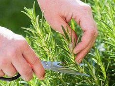 Aplicativo gratuito ajuda a cultivar horta em casa.