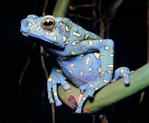 Anfíbios / Amphibians www.boneyardbakery.net