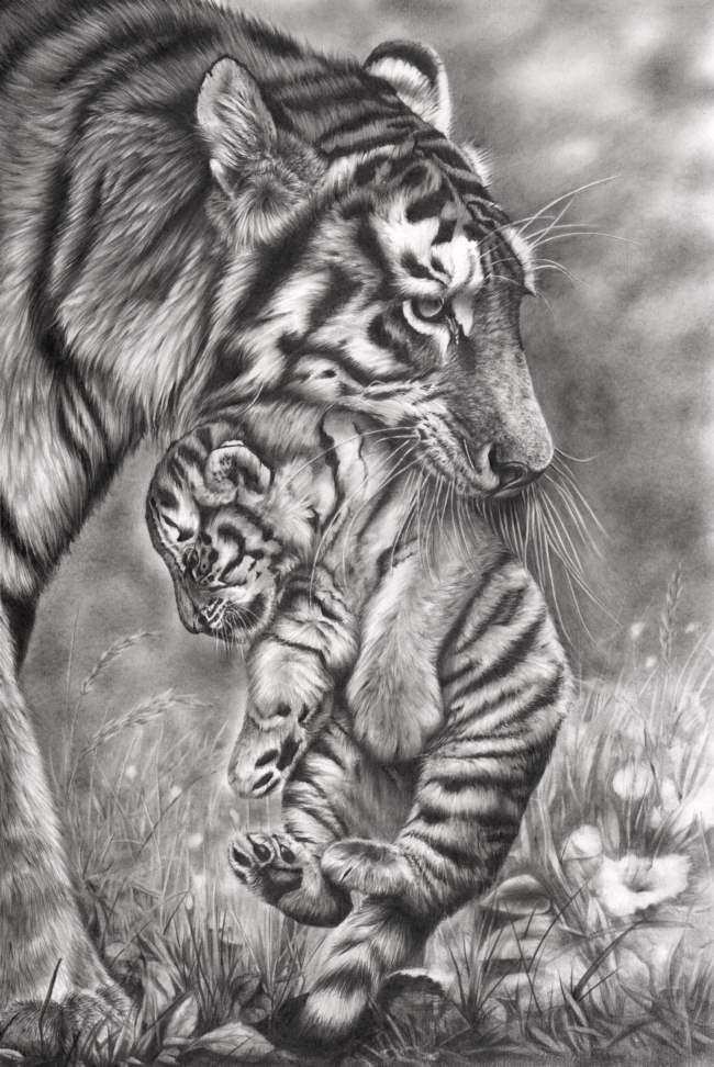 Pencil drawing by Peter Williams.