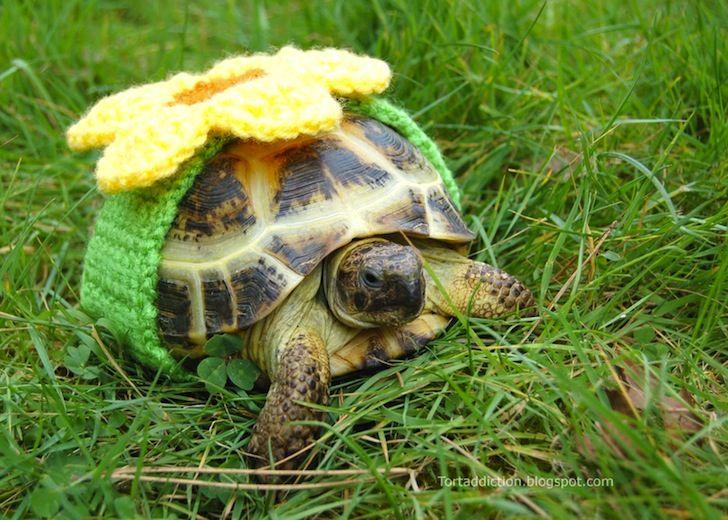 R Turtles Good Pets 26 best Tortoises in s...