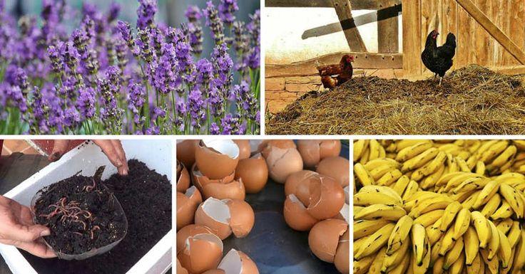 De forma natural, con fertilizantes orgánicos caseros, vamos a dar a nuestras plantas nutrientes extras que les ayudaran a crecer mas sanas y fuertes.