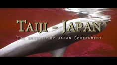 Taiji-Japan - The Untruth by Japan Government