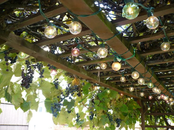 My uncle had a grape vine trellis in his yard. I used to love to hang out under it and smell all the grapes. I love the style and the lights on this one.
