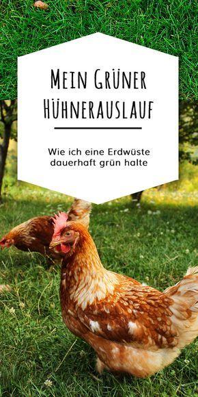 Mit dieser Mischung will ich die Grasnarbe im Auslauf maximal belastbar machen, den Untergrund so vorbereiten, dass er bei Regen nicht komplett verschlammt, Futterpflanzen für die Hühner mit anbauen und einfach immer einen grünen Bereich für die Hühner zur Verfügung haben.
