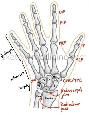 8 carpal bones:      S – scaphoid = Some     L – lunate = Lovers     Tq – triquetrum = Try     P – pisiform = Positions     Tm – trapezium = That     Td – trapezoid = They     C – capitate = Can't      H – hamate = Handle
