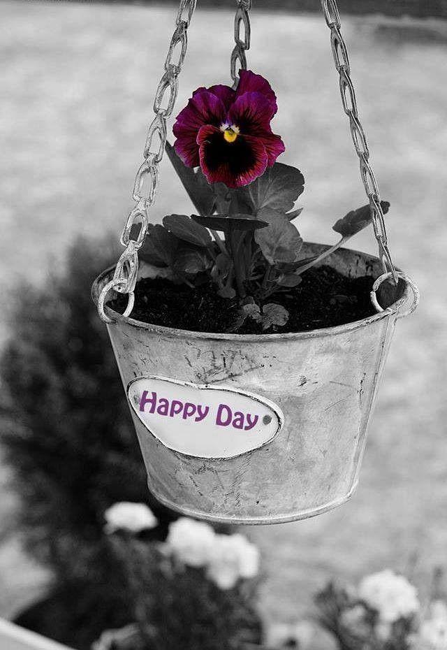 Schastlivogo Dnya Pansies Flowers Pansies Flower Garden Pictures