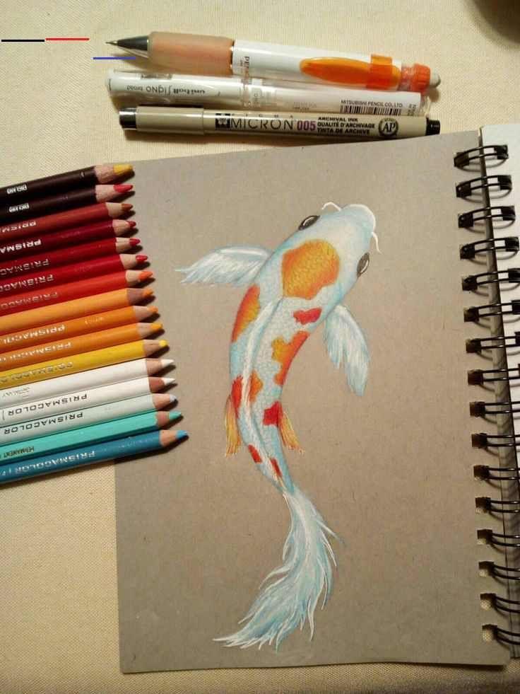 Koi Fish Drawing By Philosophicalphoton On Deviantart I Used