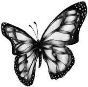 Resultado de imagen para mariposas dibujos a lapiz