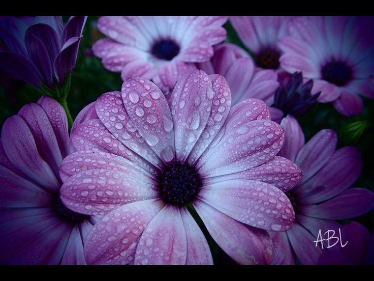Blomst.