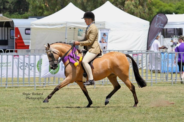 Live streaming of Canberra Royal right now !! I LOVE the Internet...just saying !!! #lovintheinternet #canberraroyal #horsewebsites #horses Follow the Link below: http://snip.ly/pkhZ pic: ARI Angell bred by ColeView Equine Management