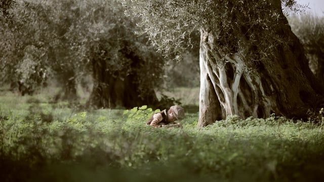 short film about the olive groves of Crete and the stories of the people who take care of them