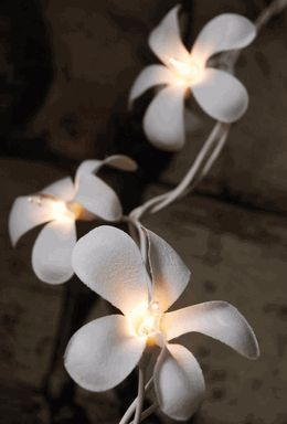 Plumeria Flower Lights 20 Flowers 10 Feet. Want to wrap these on my bed frame WHEN i get my bed back